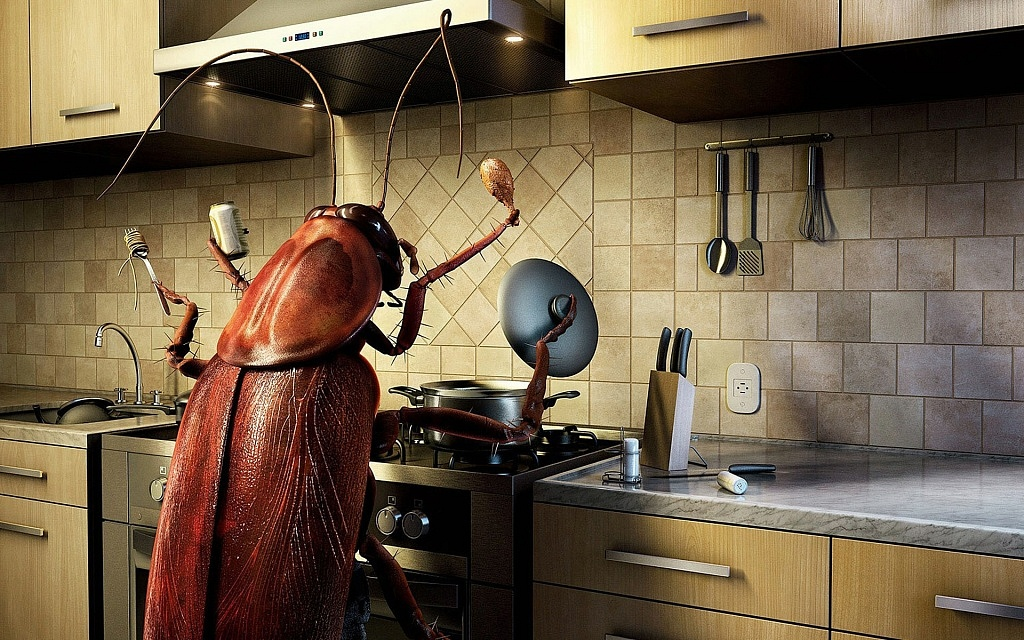 funny-cool-cockroach-wallpaper