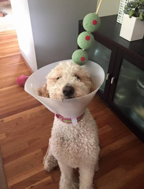 dog martini-halloween-ideas-costume